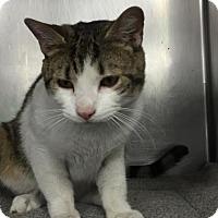 Adopt A Pet :: Tobias - Menands, NY