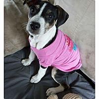 Adopt A Pet :: Vidia - Columbus, OH