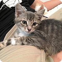 Adopt A Pet :: Stormy - Orange, CA