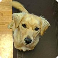 Adopt A Pet :: FOSTER Crash - San Jose, CA
