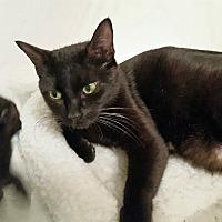 Adopt A Pet :: Velvet - Duluth, GA
