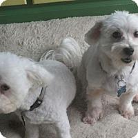 Adopt A Pet :: JoJo & Ziggy - Suffolk, VA