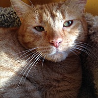 Adopt A Pet :: CHESTER - Ridge, NY