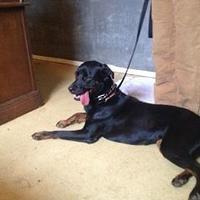 Adopt A Pet :: Dyna LFS - Schertz, TX
