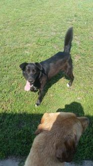 Border Collie Mix Dog for adoption in Athabasca, Alberta - Twirly
