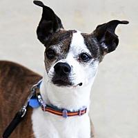 Adopt A Pet :: Zoey - St Paul, MN