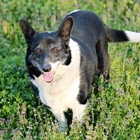 Adopt A Pet :: PRINCESS HAPPY - Norfolk, VA