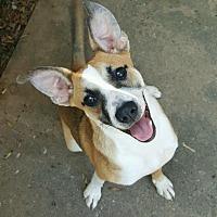 Adopt A Pet :: Chelsea - Morganton, NC