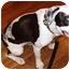 Photo 1 - Pointer Mix Puppy for adoption in Marietta, Georgia - Eames