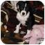 Photo 2 - Border Collie Mix Puppy for adoption in Cincinnati, Ohio - Gus