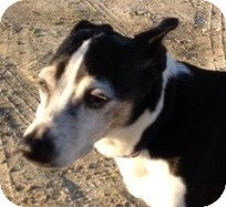 Rat Terrier/Terrier (Unknown Type, Small) Mix Dog for adoption in Sneads Ferry, North Carolina - Max