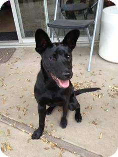 Shepherd (Unknown Type) Mix Dog for adoption in Tustin, California - Nikki