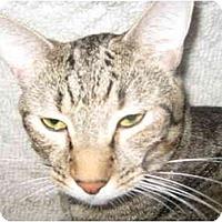 Adopt A Pet :: Croc - Deerfield Beach, FL