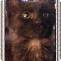 Adopt A Pet :: Ainsley - Jacksonville, FL