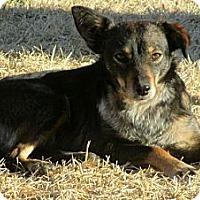 Adopt A Pet :: BONNIE(Part of a Bonded Pair) - Leland, MS