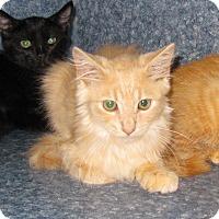Adopt A Pet :: Leon - Harrisburg, NC