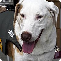 Adopt A Pet :: Montana - Arden, NC