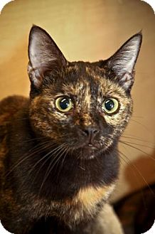 Domestic Mediumhair Cat for adoption in Tallahassee, Florida - ANNIE (ANASTASIA )