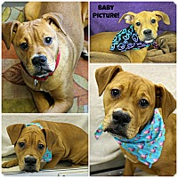 Adopt A Pet :: Truffles - Forked River, NJ