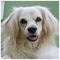 Adopt A Pet :: FABIO - Glendale, CA