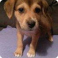 Adopt A Pet :: DANIEL - Hampton, VA