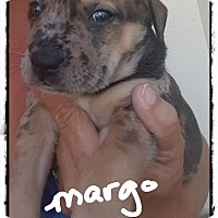Adopt A Pet :: Margo ready 7/13/17 - Palm Bay, FL