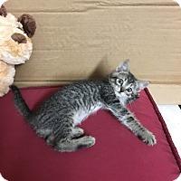 Adopt A Pet :: Darcy - Redding, CA