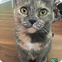 Adopt A Pet :: Smokey & Lily - Oakville, ON