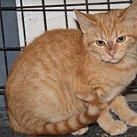Adopt A Pet :: Sunkist (Spayed) - Marietta, OH