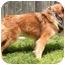 Photo 3 - Australian Shepherd Mix Dog for adoption in Cincinnati, Ohio - Skip