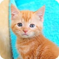 Adopt A Pet :: Punkin - Ft. Lauderdale, FL