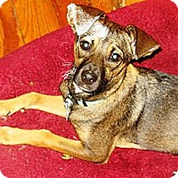 Adopt A Pet :: Carly - PENDING, in ME - kennebunkport, ME