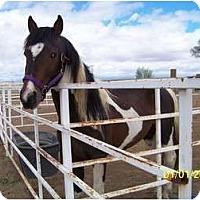 Adopt A Pet :: Diablo - Pueblo, CO