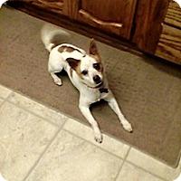 Adopt A Pet :: Toby (aka Rhombus) - Rancho Cordova, CA