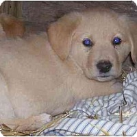 Adopt A Pet :: Dusty - Chandler, IN