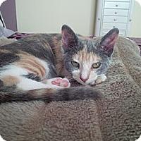 Adopt A Pet :: Daffney - Miami, FL