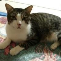 Adopt A Pet :: Purrby - Mesa, AZ