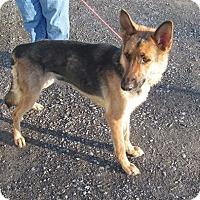 Adopt A Pet :: BEAUTY - Tully, NY