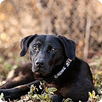 Adopt A Pet :: Phoenix - Cincinnati, OH