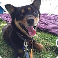 Adopt A Pet :: Sally - Los Angeles, CA