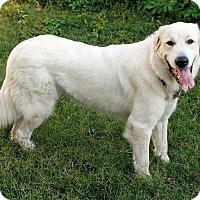 Adopt A Pet :: Autumm *Adopted - Tulsa, OK