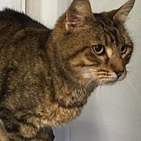 Adopt A Pet :: Felix - New Bern, NC