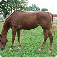 Adopt A Pet :: Tashi - Gallatin, TN