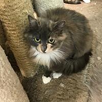 Adopt A Pet :: Lily - Byron Center, MI