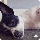 Adopt A Pet :: Lana