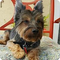 Adopt A Pet :: Patrick - Davie, FL