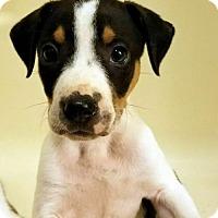Adopt A Pet :: Austin Earl - Longview, TX