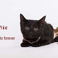 Adopt A Pet :: Eenie - Sherman Oaks, CA