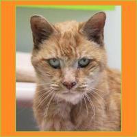 Adopt A Pet :: Leonard - Batavia, OH