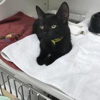 Adopt A Pet :: Bosco - Jacksonville, FL